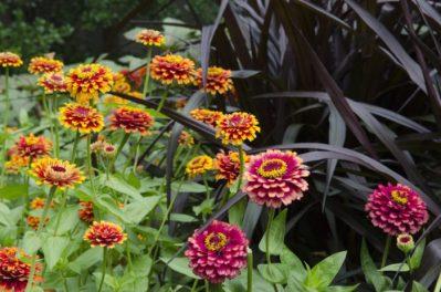 Summers at Cheekwood garden flowers