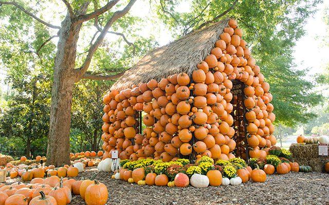 Cheekwood harvest cheekwood estate gardens nashville - Botanic gardens pumpkin festival ...