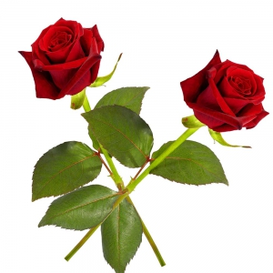 Romantic Artificial Red Rose Pair Special Valentine Express Gift  DLV5FLW607