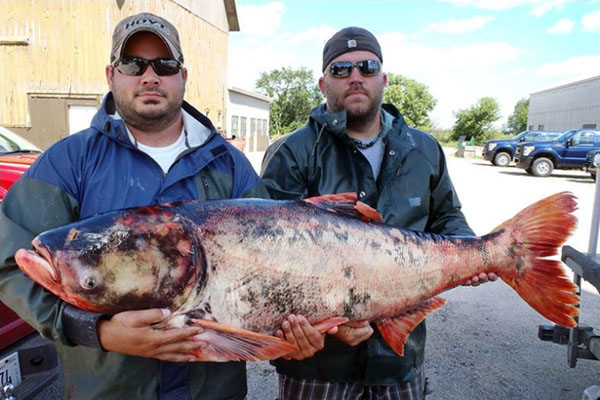 Something is. Asian carp dna