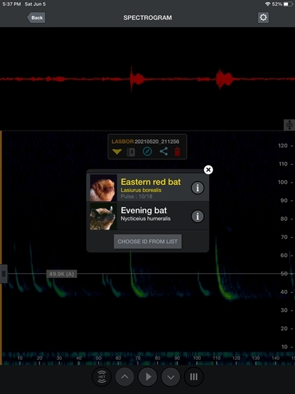 A digital output of a bat recording is shown. The output has a spectrogram, or visualization of bat calls. It indicates the bat recorded is likely an Eastern red bad or evening bat.