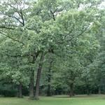 Ec_tinley_creek_oaks041