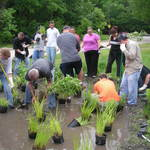 _6-05_rain_garden_planting_hsbc_(4)