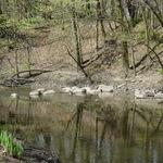 River-springtime