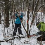 Cutting_buckthorn_in_winter_-_for_web