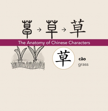 The Anatomy of Chinese Characters