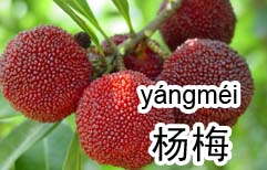 Chinese Fruits
