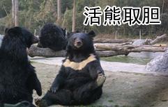 """""""活熊取胆""""引发争议"""