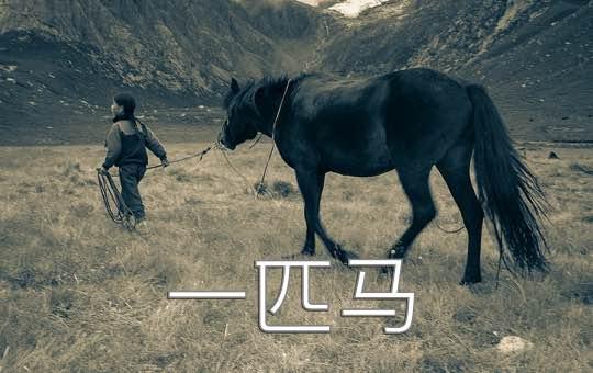 Such a Cute Horse
