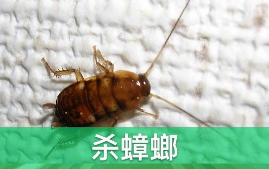 Killing Roaches