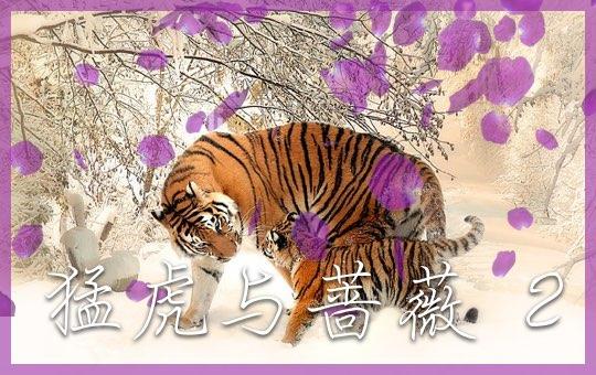 猛虎与蔷薇 Part 2