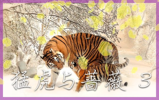 猛虎与蔷薇 Part 3