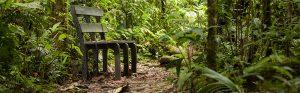 aventura bosques 4-2