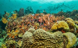 Video aventura marina
