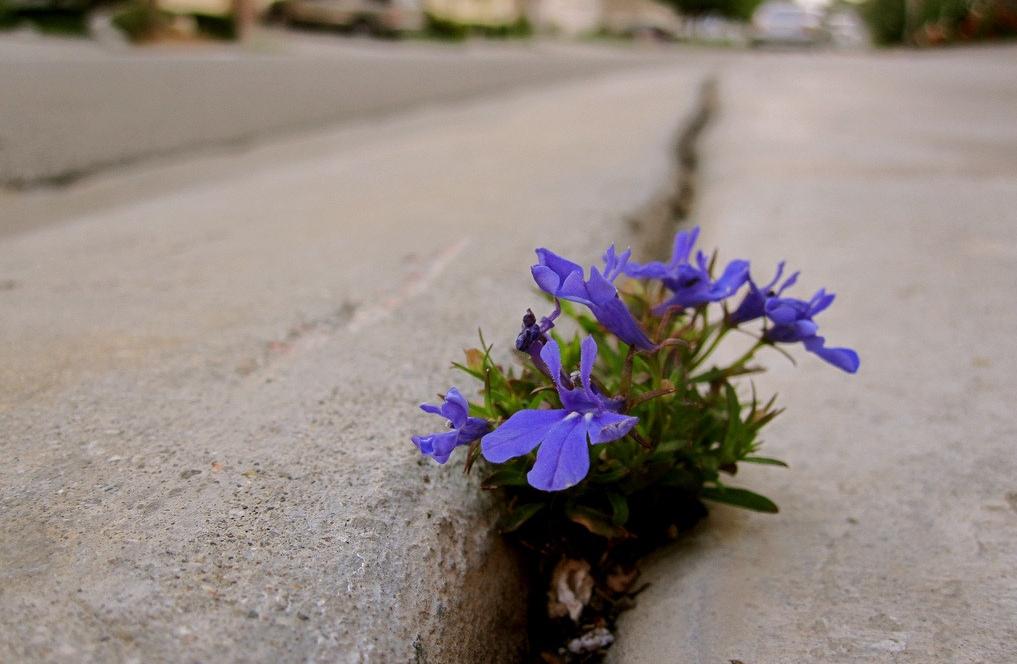 Daytona Beach Church Hope For Daytona - sidewalk flower
