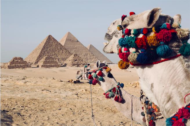 Camels Pyramids
