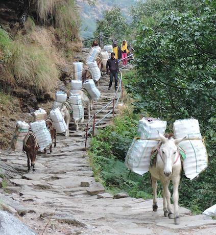 Nepaland the donkeys
