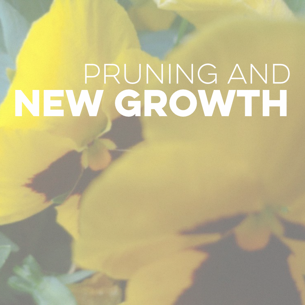 Social Media - Pruning & New Growth