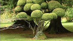Cropped_thumb_330_esprit_lieux_d_un_jardin