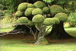 Thumb_330_esprit_lieux_d_un_jardin