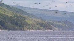 Cropped_thumb_255_st_laurent_garde_manger_des_oiseaux_migrateurs