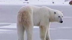 Cropped_thumb_canadian_geographic_ours