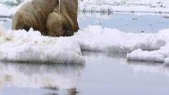Cropped_thumb_2011_tous_unis_pour_arctique