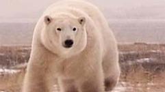 Cropped_thumb_terres_arctique_premier_partir