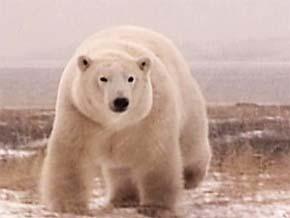 Thumb_terres_arctique_premier_partir