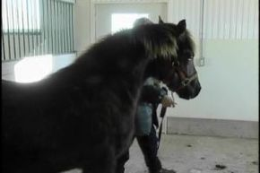 Thumb_1517_histoires_oubliees_petit_cheval_de_fer