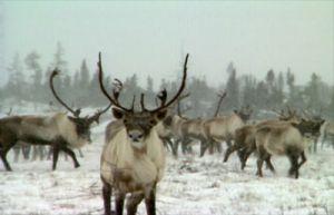 A Vast Land: Nunavik