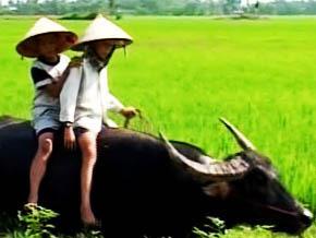 Thumb_ma_vie_sur_la_ferme_khan_vietnam