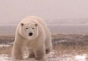 Thumb_963_terres_arctiques_premier_partir