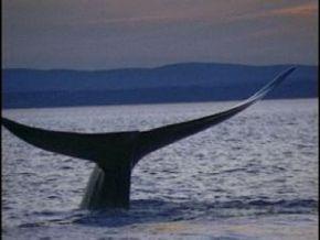 Thumb_58_rencontre_avec_les_baleines