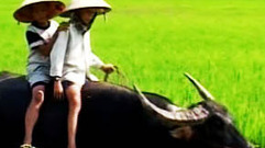 Cropped_thumb_ma_vie_sur_la_ferme_khan_vietnam