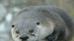 Cropped_thumb_2654_monde_et_nature_animaux_20et_hiver