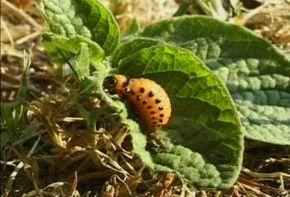 Thumb_2653_monde_et_nature_insectes