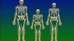 Cropped_thumb_2651_monde_et_nature_squelettes