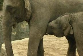 Thumb_2644_monde_et_nature_animaux_et_leurs_bebes
