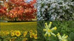 Cropped_thumb_2642_monde_et_nature_fleurs_plantes