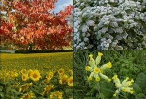 Thumb_2642_monde_et_nature_fleurs_plantes