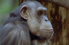 Thumb_2420_animaux_trop_humains_politique_animale