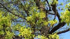 Cropped_thumb_mes_ptits_docs_promener_arbres