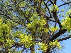 Thumb_mes_ptits_docs_promener_arbres