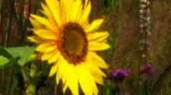 Cropped_thumb_entretien_avec_la_mati_re_fleurs