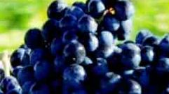 Cropped_thumb_entretien_avec_la_mati_re_raisins