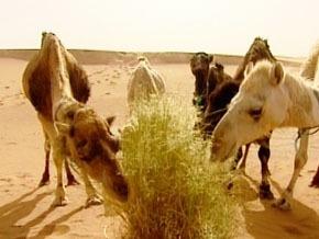 Thumb_desertification_sud_maroc