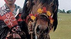 Cropped_thumb_1602_cavaliers_du_mythe_sumbanese