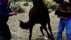 Cropped_thumb_1599_cavaliers_du_mythe_gauchos