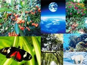 Thumb_biodiversite